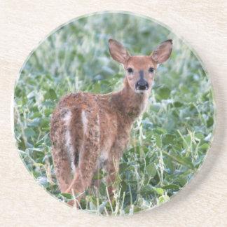 EUA, Kansas, cervo de Whitetail pequeno Porta Copos De Arenito