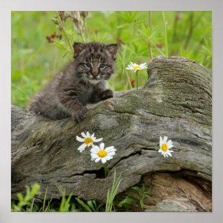 EUA, Minnesota, arenito, animais selvagens 10 de Poster
