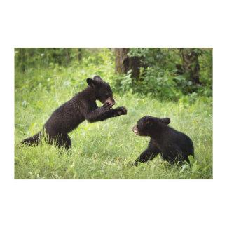 EUA, Minnesota, arenito, animais selvagens 21 de Impressão De Canvas Envolvidas
