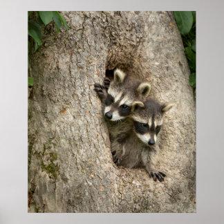 EUA, Minnesota, arenito, animais selvagens 7 de Poster