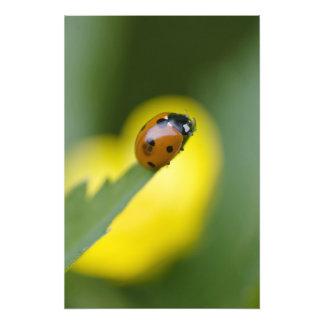 EUA, North Carolina, joaninha na ponta da folha Impressão De Foto