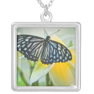 EUA, Pensilvânia. Borboleta de Swallowtail Colar Banhado A Prata