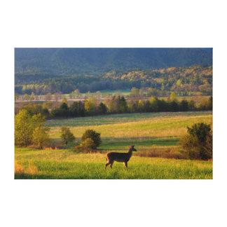 EUA, Tennessee, cervo em um pasto na angra de Impressão Em Tela