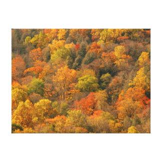 EUA, Tennessee. Folhagem de outono 2 Impressão De Canvas Esticadas