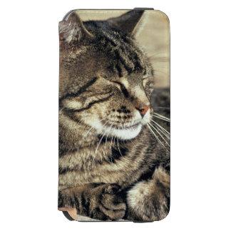 EUA, Utá, recife NP do Capitólio. Gato de gato Capa Carteira Incipio Watson™ Para iPhone 6