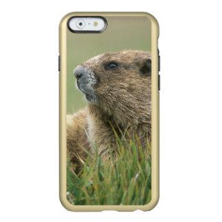EUA, Washington, olimpiadas NP, marmota olímpica Capa Incipio Feather® Shine Para iPhone 6