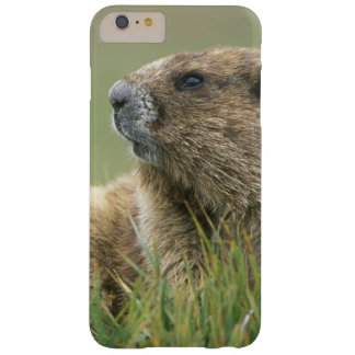 EUA, Washington, olimpiadas NP, marmota olímpica Capas iPhone 6 Plus Barely There