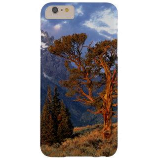EUA, Wyoming, Teton grande NP. Um cedro solitário Capas iPhone 6 Plus Barely There