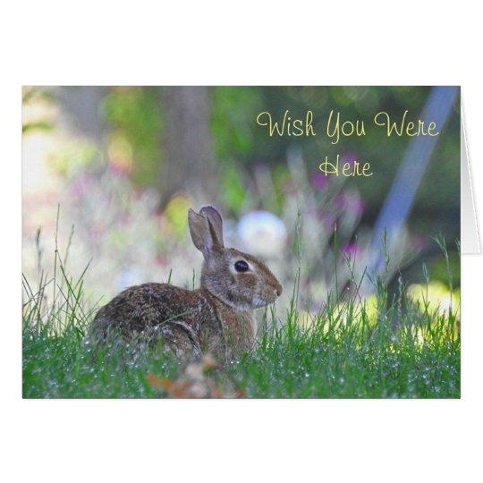 Faltando o coelho cartão comemorativo