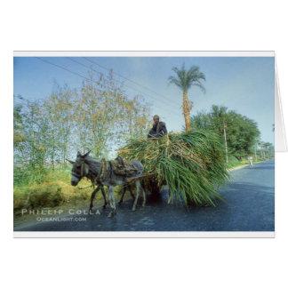 farmer-photo-18500-856601 jpg