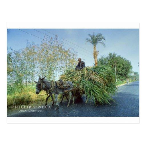 farmer-photo-18500-856601.jpg cartões postais