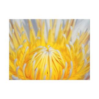 Feche acima da vista de uma flor amarela e branca impressão em canvas