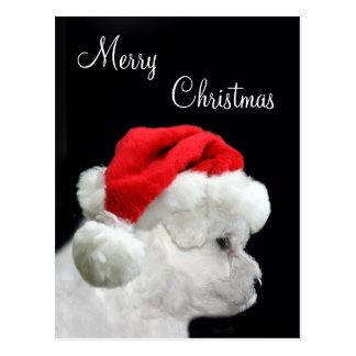 Feliz Natal Bichon Frise Cartão Postal