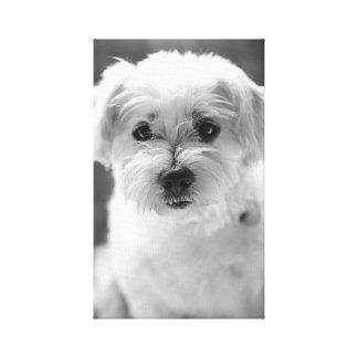 Filhote de cachorro do branco da fotografia impressão em tela canvas