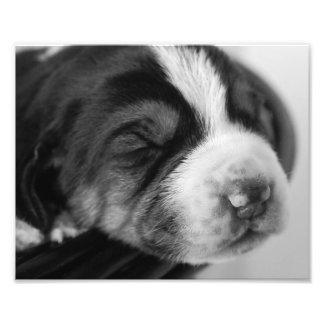 Filhote de cachorro do Coonhound Arte De Fotos