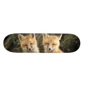 Filhote de cachorro do Fox vermelho na frente do v Shape De Skate 18,1cm