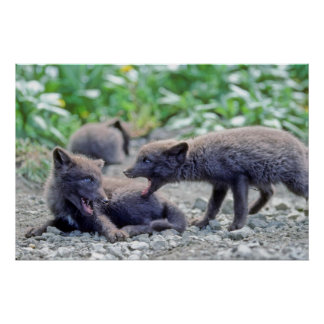 Filhotes de cachorro 3 do Fox Poster