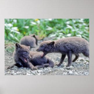 Filhotes de cachorro 3 do Fox Pôsteres
