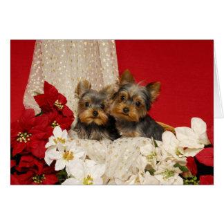 Filhotes de cachorro de Yorkie com poinsétias Cartão Comemorativo