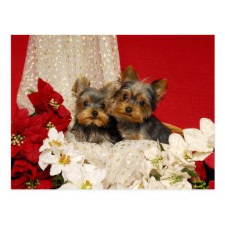 Filhotes de cachorro de Yorkie com poinsétias Cartão Postal