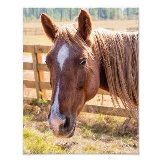 Fim-Acima de um cavalo de Brown em uma fotografia