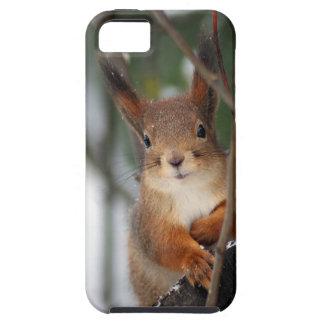 Fim-acima do esquilo vermelho capas para iPhone 5