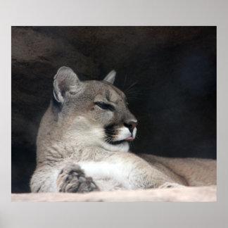 Fim-Acima do retrato do leão de montanha do puma Poster