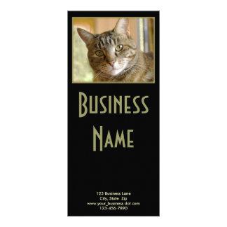 Fim cinzento do gato malhado acima da fotografia panfleto informativo