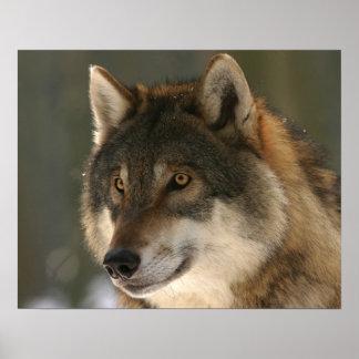 Fim do poster da foto do lobo acima da cara