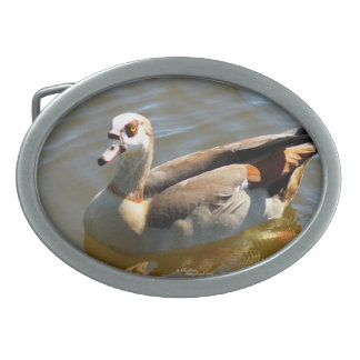 Fivela de cinto bonita do pato