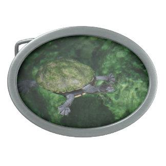 Fivela de cinto da tartaruga verde