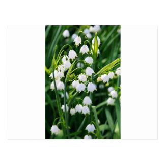 Flocos de neve do primavera cartão postal