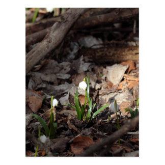 Flocos de neve do primavera em uma floresta cartão postal