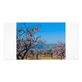 Flor 3 da amêndoa cartão com fotos personalizado