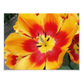 Flor alaranjada e vermelha impressão fotográficas