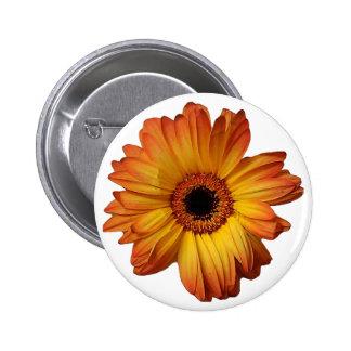 Flor alaranjada ensolarada da flor do gerbera botons