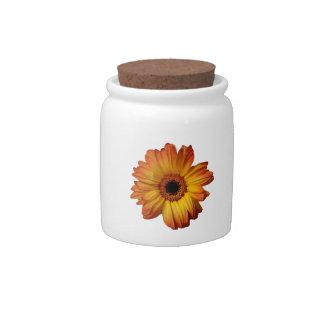 Flor alaranjada ensolarada da flor do gerbera jarro de doce