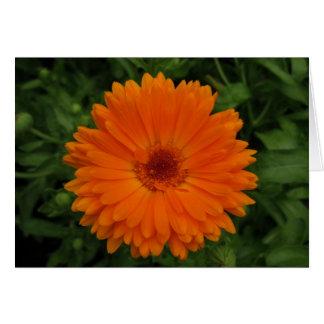 Flor aniversário-alaranjada Portuguesa-feliz Cartoes