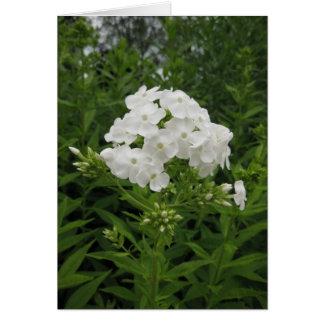 Flor aniversário-branca Portuguesa-feliz Cartão Comemorativo