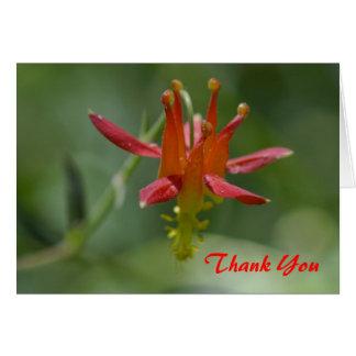 Flor aquilégia carmesim, fuga pacífica da crista, cartão comemorativo