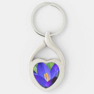 Flor azul bonita do açafrão chaveiro
