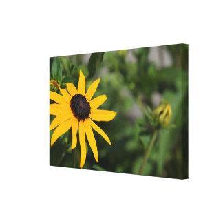 Flor bonita de Susan de olhos pretos Impressão Em Tela
