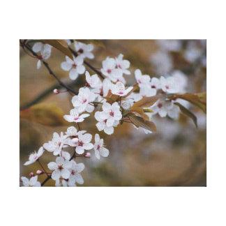 Flor bonita do branco da foto do fim-acima impressão em canvas