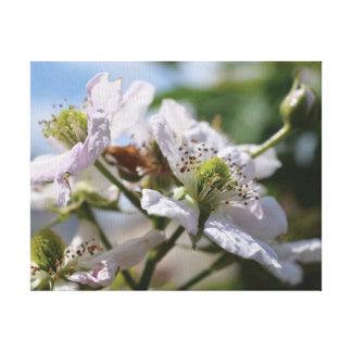 Flor bonita do branco da foto do fim-acima impressão em tela