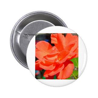 flor bonita do jardim na laranja boton