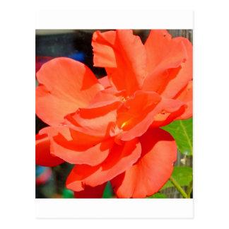flor bonita do jardim na laranja cartão postal