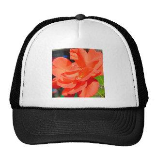 flor bonita do jardim na laranja bonés