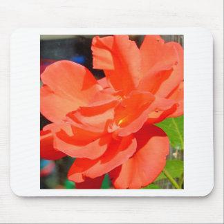 flor bonita do jardim na laranja mouse pad