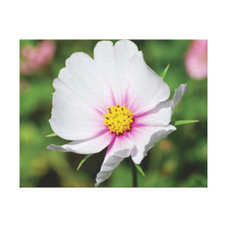 Flor branca da foto bonita do fim-acima