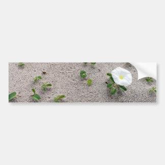 Flor branca da praia da corriola adesivo para carro